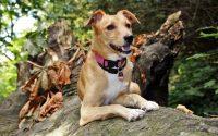 Invisible dog leash - Post Thumbnail
