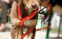 Dog leash holders - Post Thumbnail