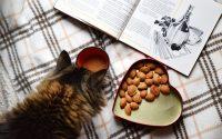 Royal Canin cat food vs Iams cat food vs Orijen Cat food - Post Thumbnail